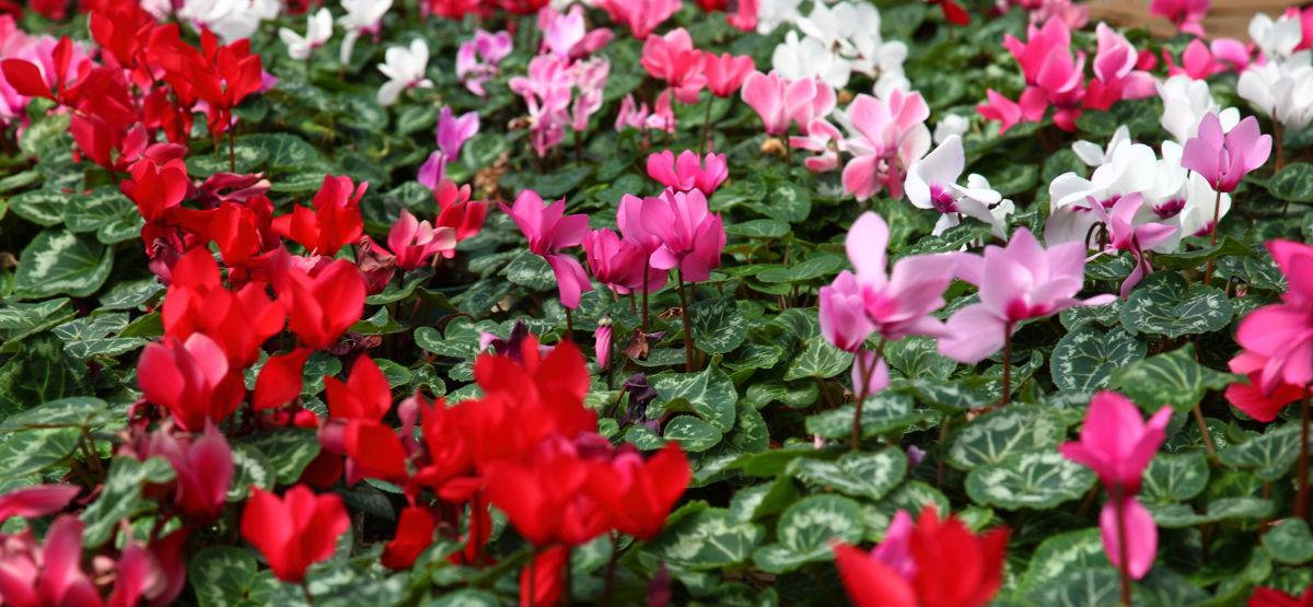Plantas de invierno my wild bouquet for Plantas para invierno